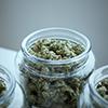 add-weed-Bu6BSErSL_M-unsplash-1