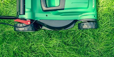 Lawn web